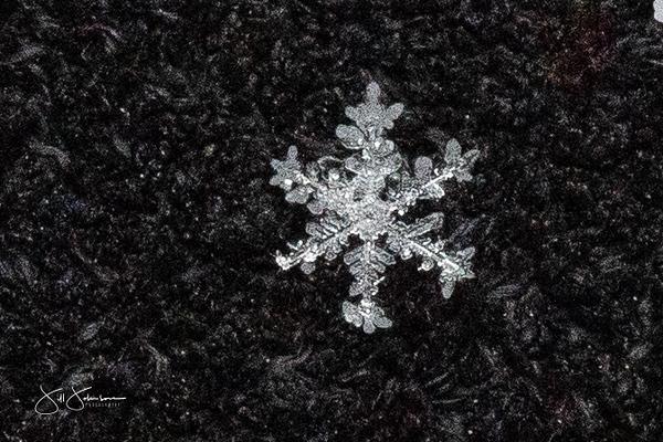 snowflakes-1439.jpg