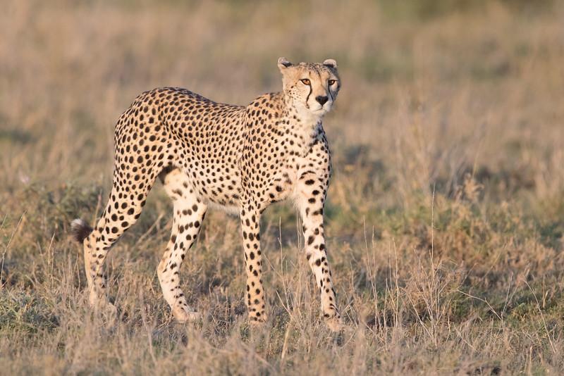 Africa - 101616 - 5899-Edit.jpg