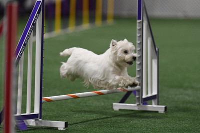 WHWT AKC Agility Trial June 13-14