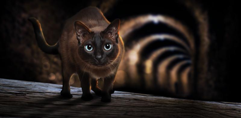 S-wcat.jpg