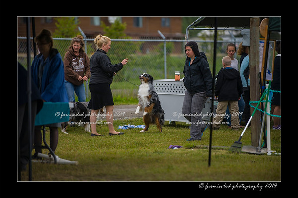 07/2014 Cook Inlet Kennel Club Show