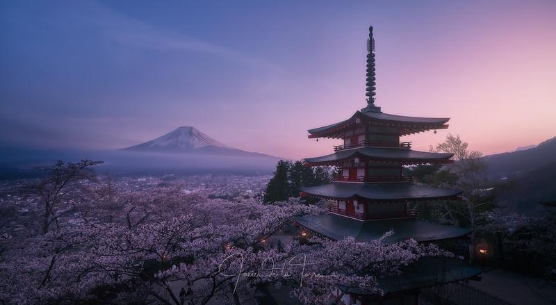 Mt Fuji Shakura.jpg
