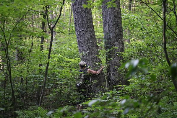 Trout Run/Steinman Run Hike June '16