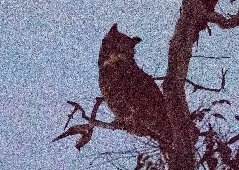 Great-horned Owl in the Dark (ISO 51200)