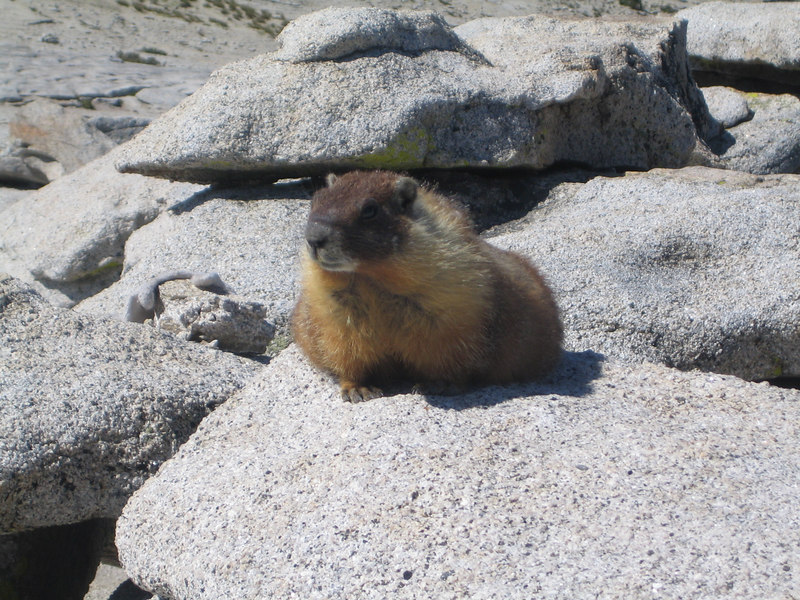 Hello you!  I loved this marmot - he was awesome!