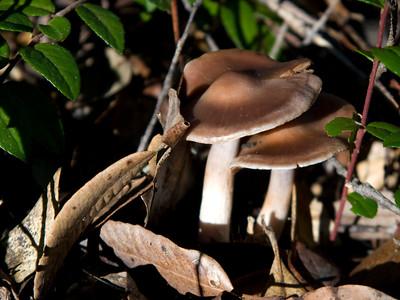 Mushrooms of Mendocino