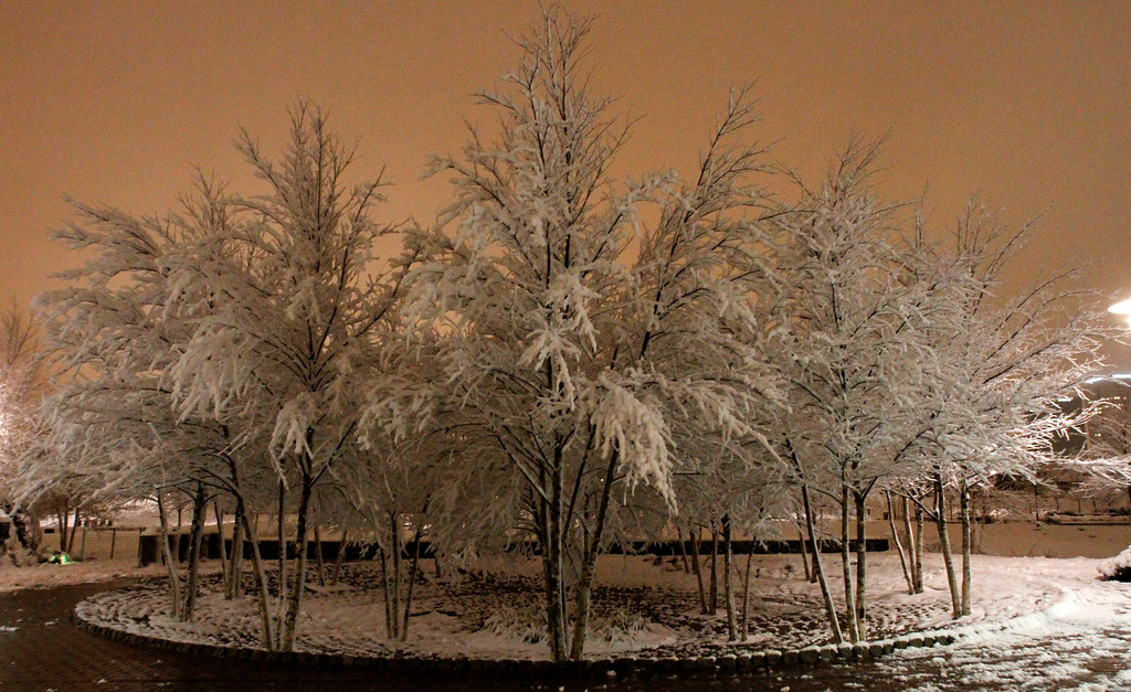 . Ice covers trees in Railroad Park as a winter storm drops several inches of snow and ice on Thursday, Feb. 13, 2014, in Birmingham, Ala. (AP Photo/Butch Dill)