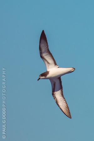 Eaglehawk Neck Pelagic