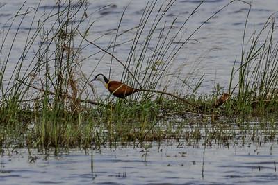 Birds of South Africa ~ Sydafrikas Fugle