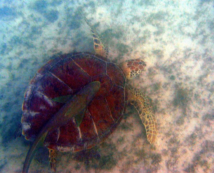 sea-turtle02.jpg