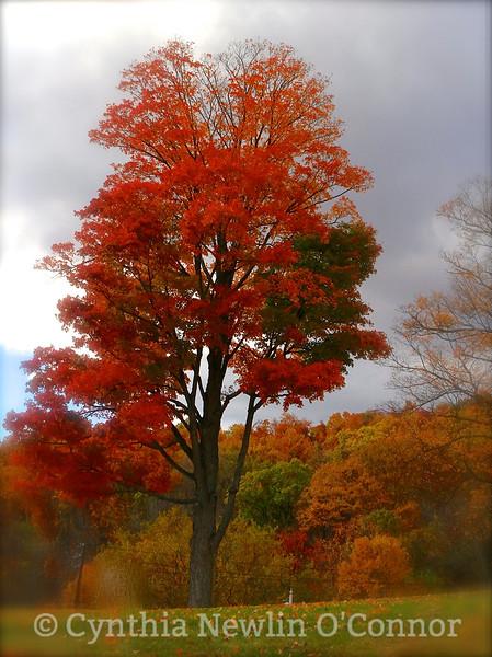 The Giving Tree.jpg