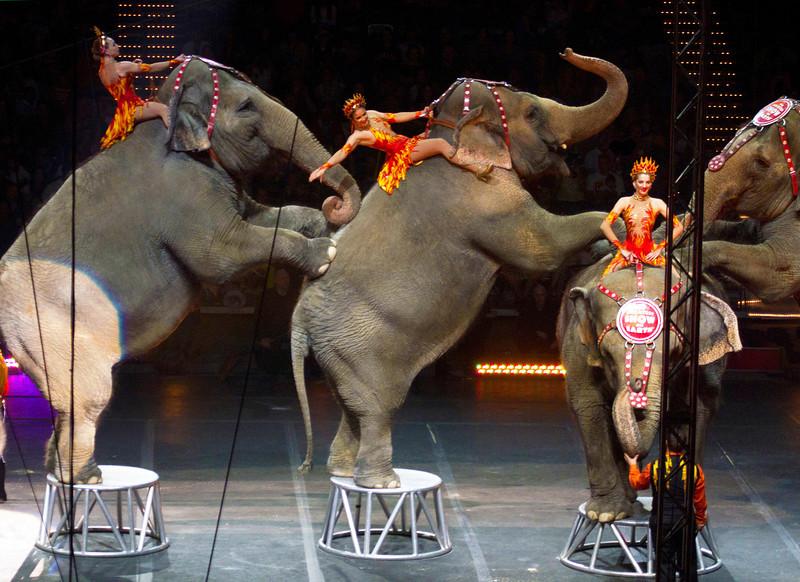 elephantsonhindlegswithriders.jpg
