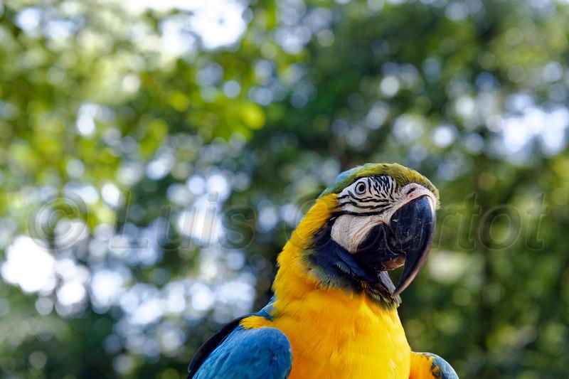 Honduras 0721_.jpg