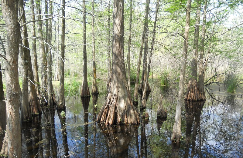 Trunks On The Bayou - Matted Print $20