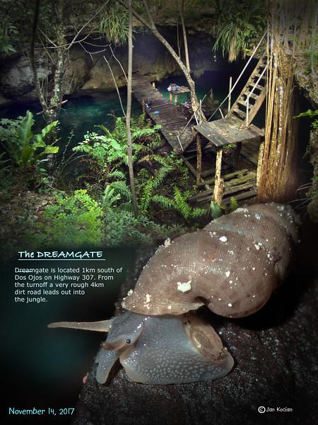 11.14.17 Dreamgate cenote 1 .jpg
