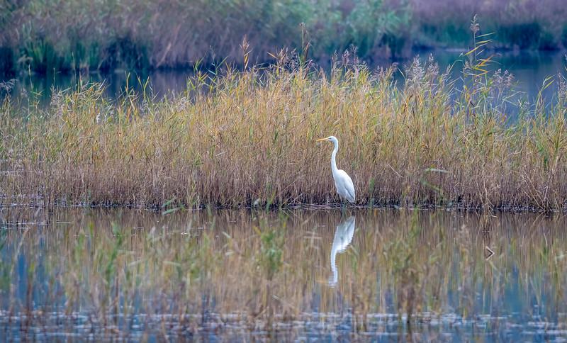 Birder's Corner - Herons and Storks