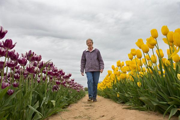 tulip_festival