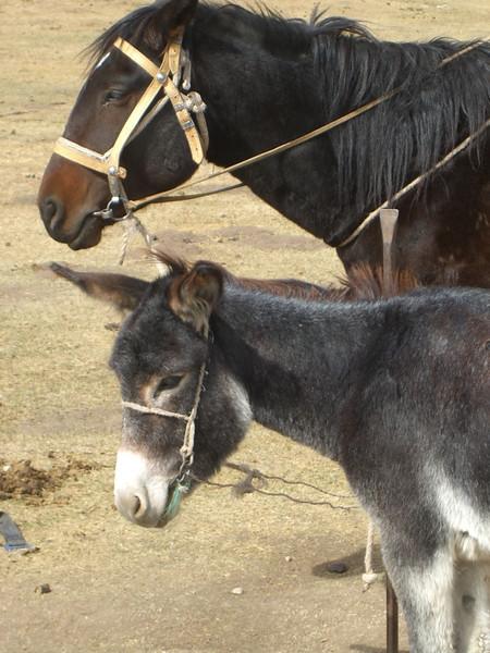 Horse and Donkey - Song Kul Lake, Kyrgyzstan