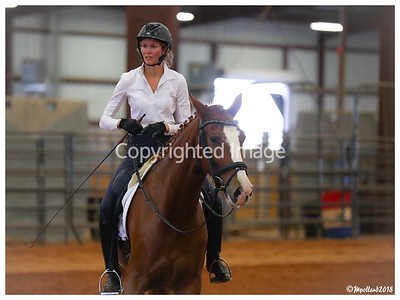 Bailey Dressage - 102918