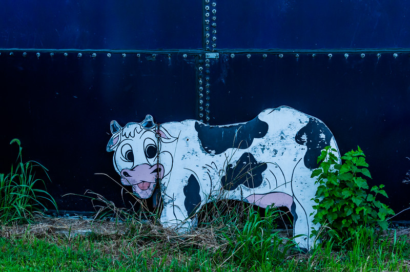Silly Cow Art