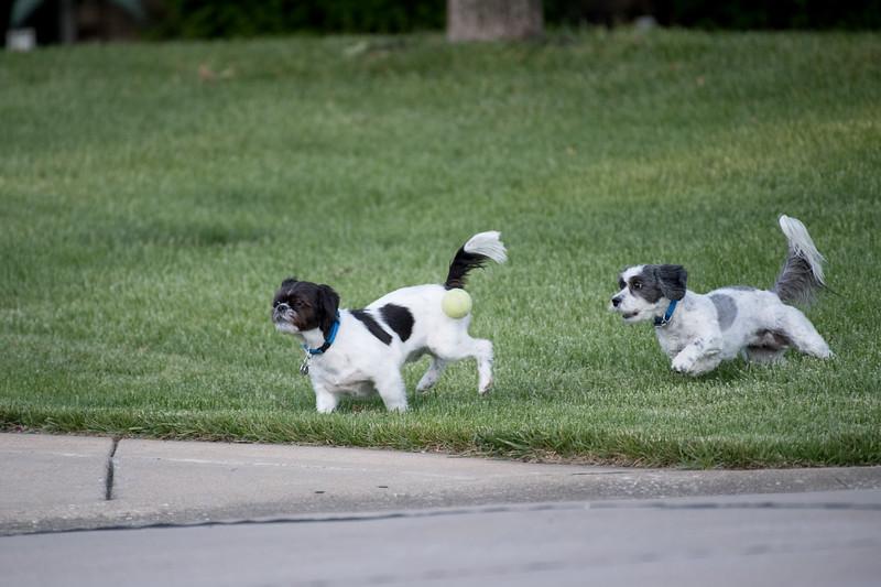 LuLu - Brady - Cooper Play Friends (34 of 109).jpg