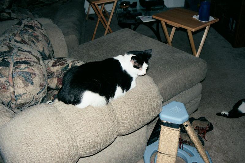 2001 08b - Cats at old apt 35.JPG