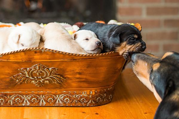 2014 Puppies