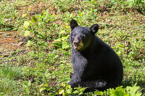 D' Bears - Aug 23rd