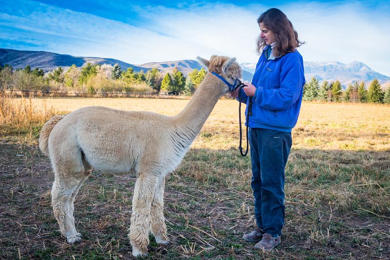 wlc Corinna Porter Alpacas330November 19, 2016.jpg