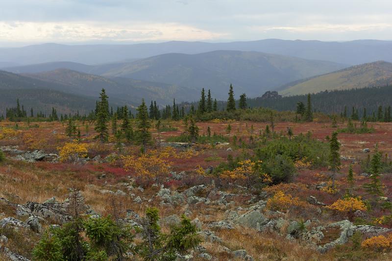 Tundra and Taiga