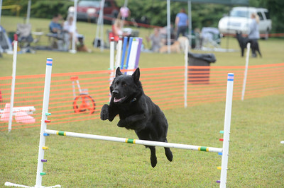 Delaware Valley German Shepherd Dog Club AKC Agility Trial September 19-20