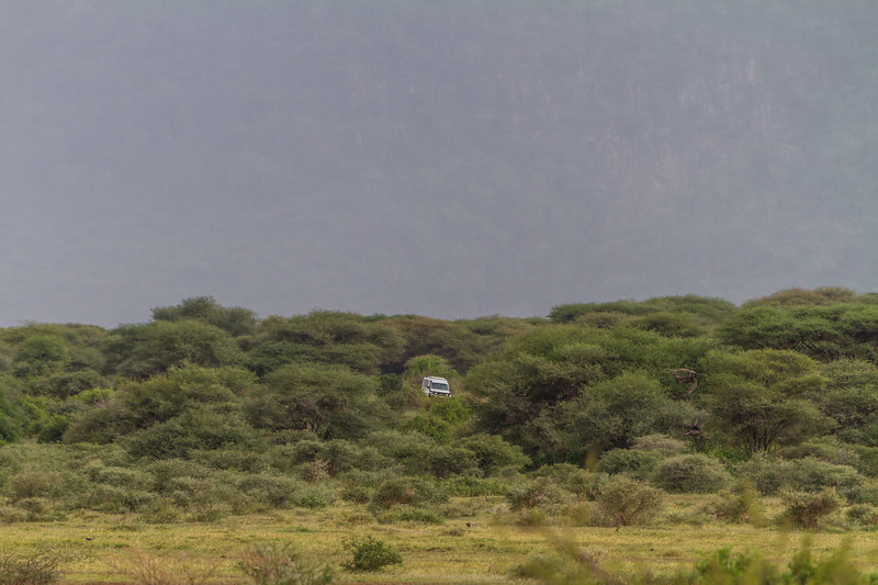 Land vehicle in forest - East Africa - Tanzania