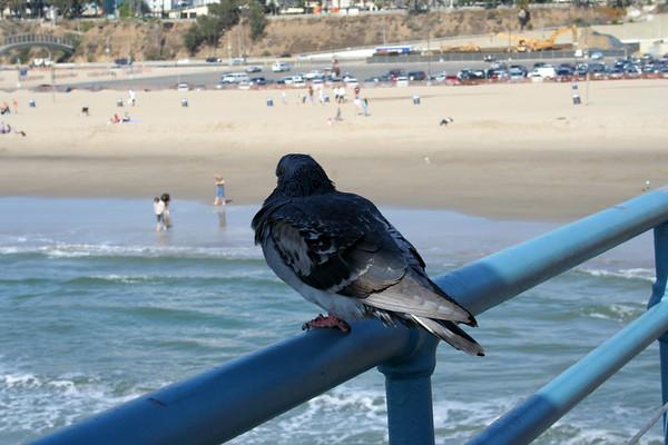 2007 - A Trip to the Beach