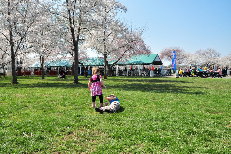 Cherry Blossoms 2014 032.jpg