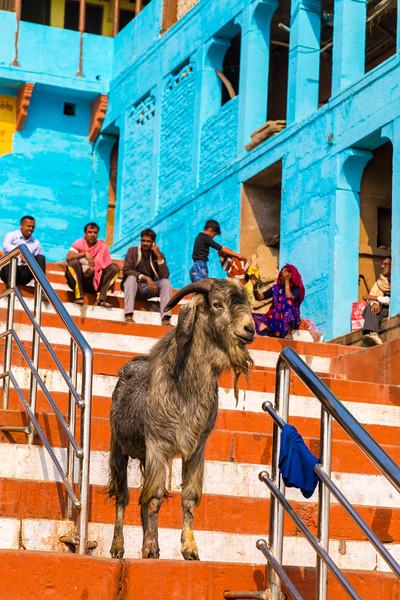 India-311.jpg
