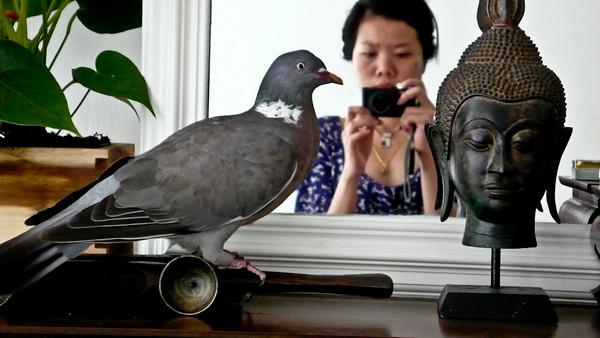Birds & Home