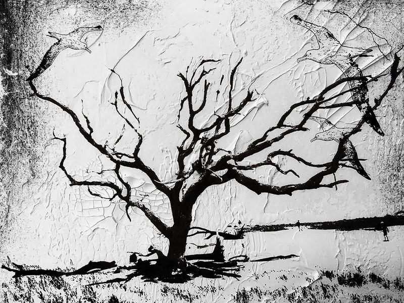 Treedreams.jpg