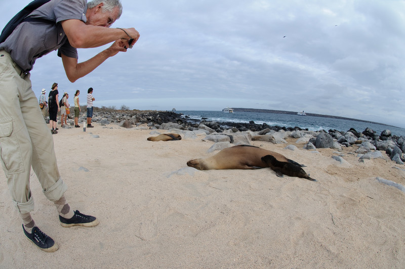 Humans and Sea Lions
