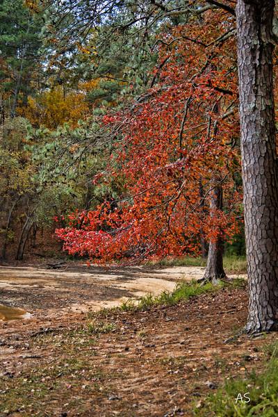 Fall Road Trip 2020