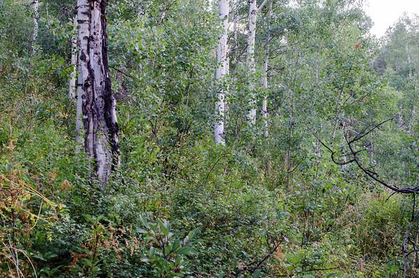 08.21 Pitkin Lake Trail