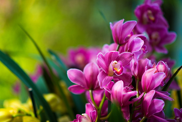 2014-03-16 Longwood Orchid Extravaganza