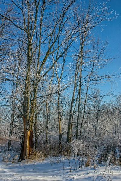 Ice storm II.jpg