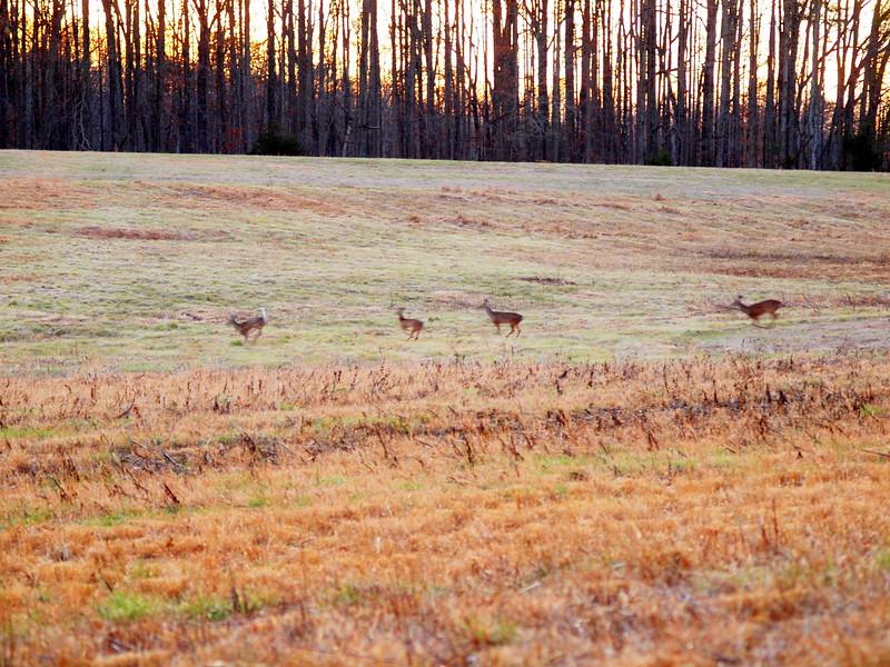 Deer Apco-005.JPG