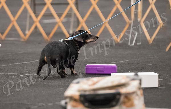 AKC Scent Work Trial EXC/Masters Container Search Sat 10 13 2018  at CCSC