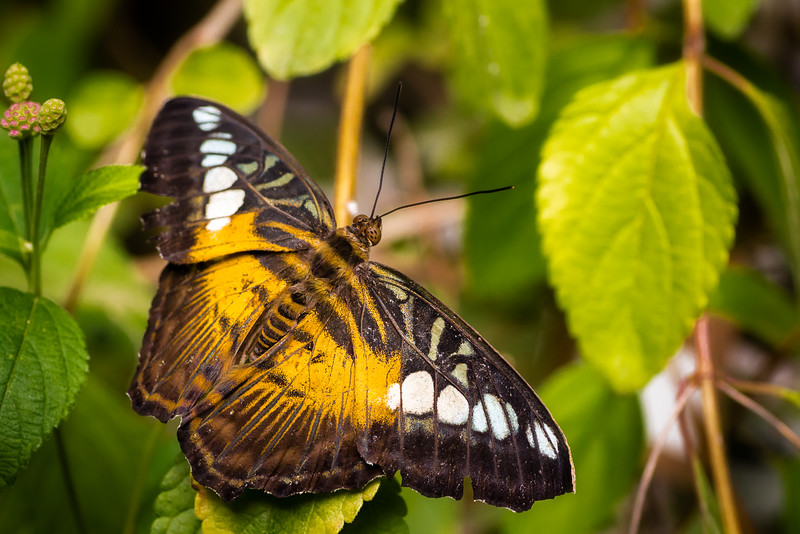 Butterfly World - Coombs, BC