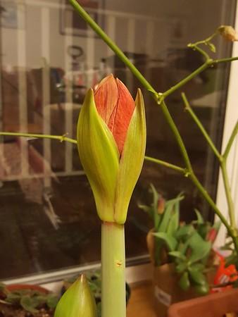 Flowers of spring 2016