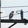 day 4 So FL Birding-365