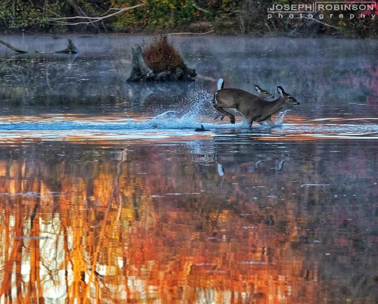 Deer~02-01.jpeg
