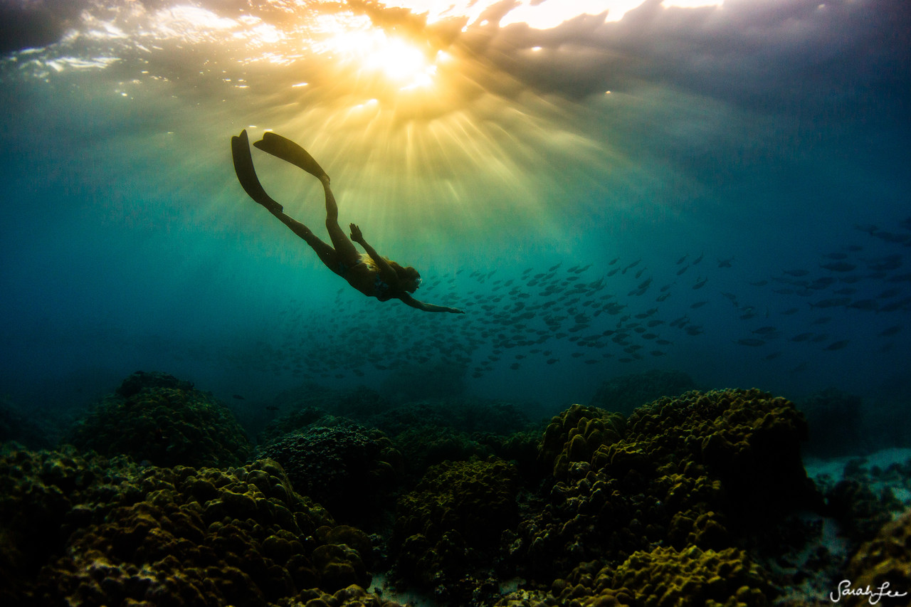 Donica Shouse, free diving with the school of akule during sunset.