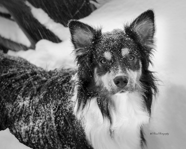 Snow Days Jan 2016-003 BW.jpg